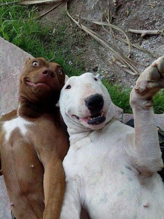 20-Dog-Selfies-0111